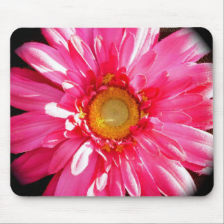 Pink Gerber Daisy Mousepad
