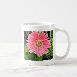 Pink Gerber Daisy Mugs