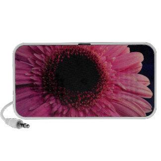 Pink Gerber Daisy iPhone Speaker