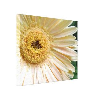 Pink Gerbera Daisy Flower Canvas Prints