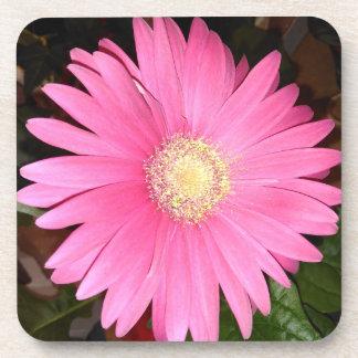 Pink Gerbera Daisy Flower Drink Coaster