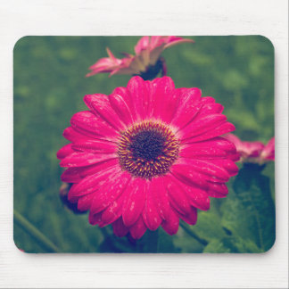 Pink Gerbera Daisy in Bloom Mouse Pad