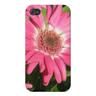 Pink Gerbera Daisy iPhone 4 Cover