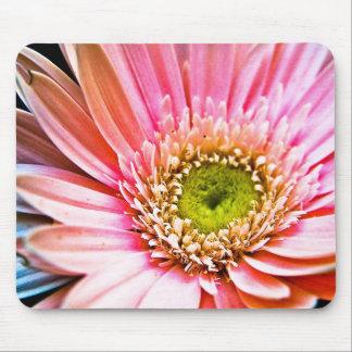 Pink Gerbera Daisy Mouse Pads