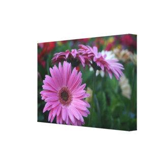 Pink gerbera daisy photograph on canvas print