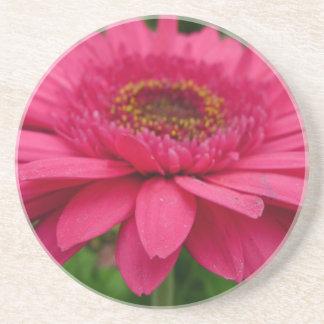 Pink Gerbera Drink Coaster