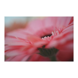 Pink Gerbera Flower Gallery Wrapped Canvas