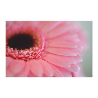 Pink Gerbera Flower Stretched Canvas Print