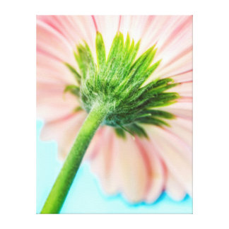 Pink Gerbera Flower Macro Stem Back Canvas Stretched Canvas Prints