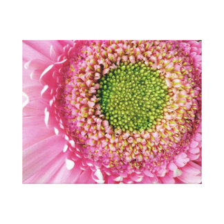 Pink Gerbera Gallery Wrapped Canvas