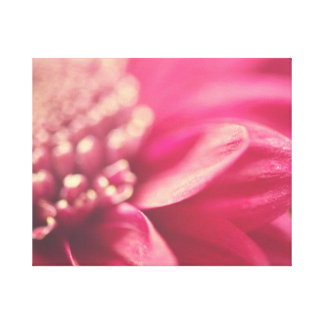 Pink Gerbera Petals Canvas Print