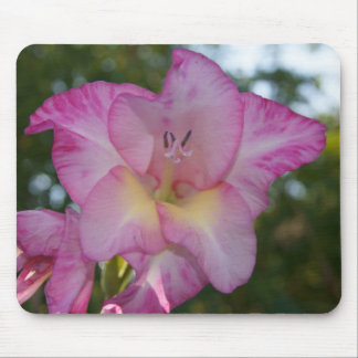 Pink Gladiolus Flowers, Mousepad