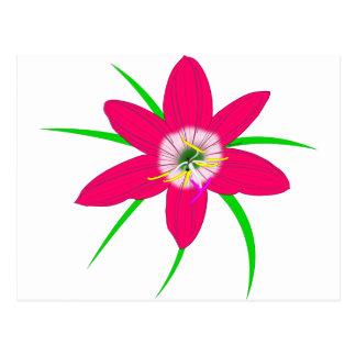 Pink Grass Flower Postcard