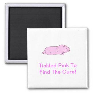 Pink Guinea Pig Magnets