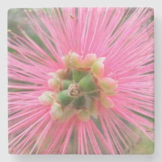 Pink Gum Tree Flower Stone Coaster
