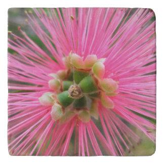 Pink Gum Tree Flower Trivets