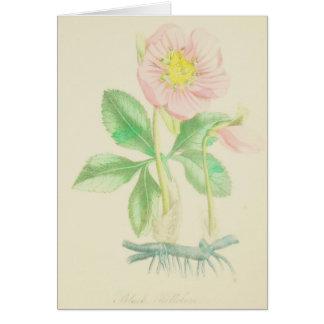 Pink Hellebore Card