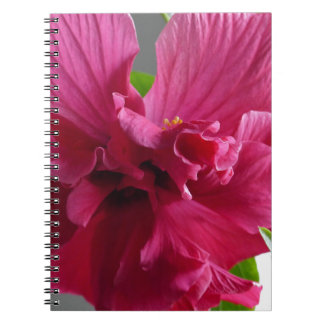 Pink Hibiscus, flourishing alder is gifta Spiral Notebook