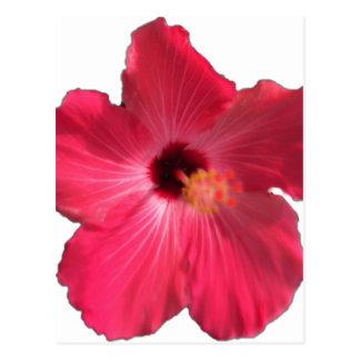 Pink Hibiscus Flower 201711e Postcard