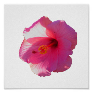 pink hibiscus flower image poster