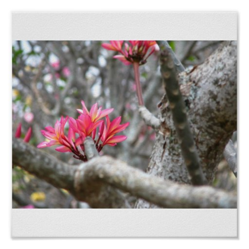 Pink Hibiscus Flower Print