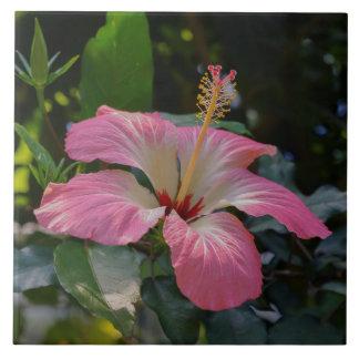 Pink Hibiscus flower Tile