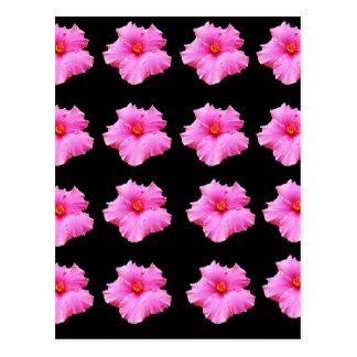 Pink Hibiscus Flowers On Black,_ Postcard