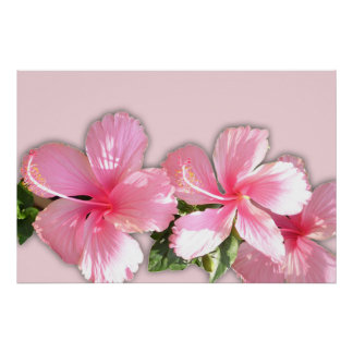 Pink Hibiscus Flowers Poster Print
