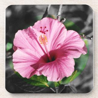 Pink Hibiscus Photo Drink Coaster