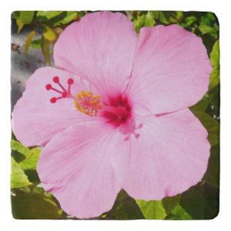 Pink Hibiscus Tropical Flower Trivet