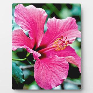 Pink Hibiskus Plaque