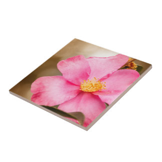 Pink Home Run Rose with Yellow Small Square Tile