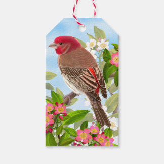 Pink House Finch in Garden Gift Tags