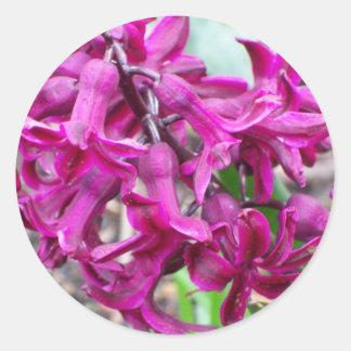 Pink Hyacinth Sticker