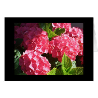 Pink Hydrangea - Blank Notecard