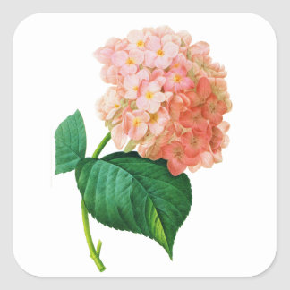 Pink Hydrangea by Pierre Joseph Redoute Square Sticker
