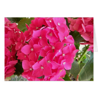 Pink Hydrangea Card