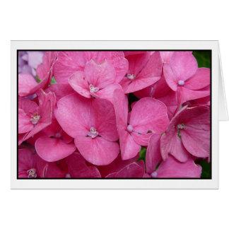 Pink Hydrangea closeup Card