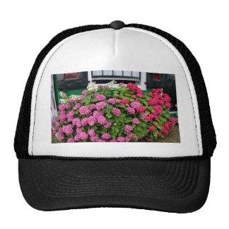 Pink hydrangeas, Holland Cap