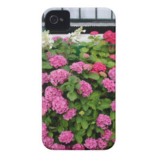 Pink hydrangeas, Holland iPhone 4 Case-Mate Cases