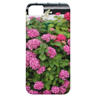 Pink hydrangeas, Holland iPhone 5 Cases
