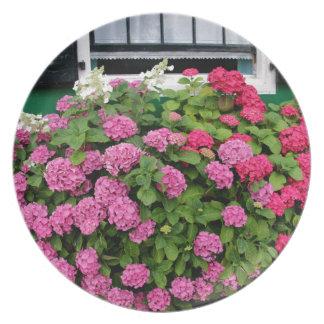 Pink hydrangeas, Holland Plates
