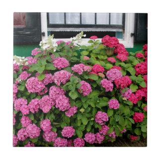 Pink hydrangeas, Holland Tile