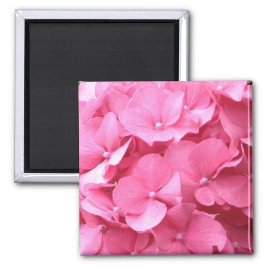 Pink Hydrangeas Magnet