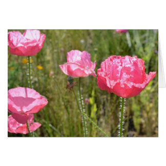 Pink Iceland Poppies Card