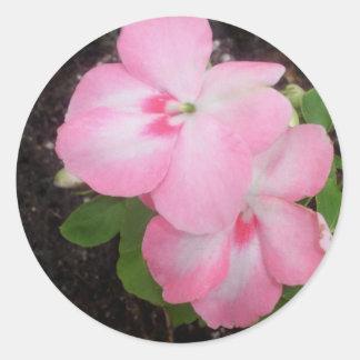 Pink Impatiens Flower Sticker