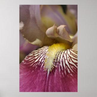 Pink Iris Flower Print