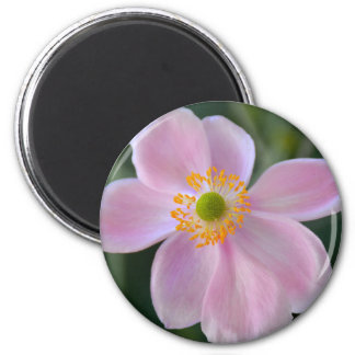 Pink japanese anemone flower magnet