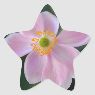 Pink japanese anemone flower star sticker