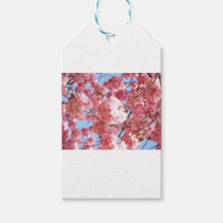 Pink Japanese Cherry Blossom Gift Tags